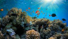 Port Blair Adventure Package – BARATANG ISLAND, HAVELOCK ISLAND, RADHANAGAR BEACH AND NEIL ...
