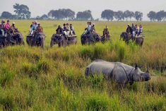 We are top travel company and best travel agent in assam. Book assam tour package, top travel ag ...