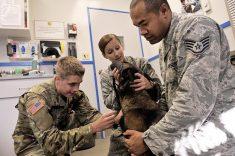 Veterans apply for Vet Tech Career Training in Los Angeles at: https://abcotechnology.edu/vet2te ...