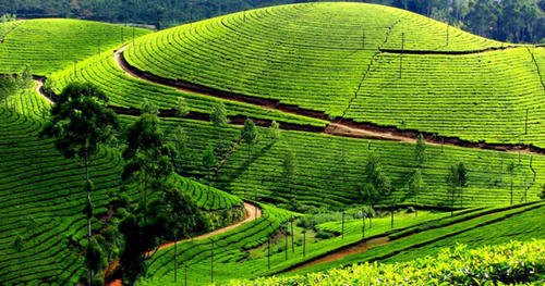 Kerala is a city of spices and beautiful sceneries in the mountains across the sea. Filled with  ...