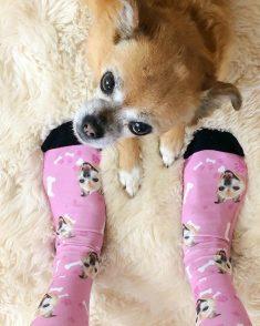 Custom Dog Socks With Your Text